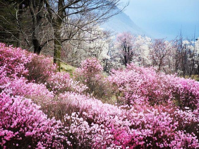 名湯 伊香保温泉<br /><br />源泉掛け流し露天風呂につかり<br />ふら~りふらりと ゆっくり散歩<br /><br />季節の花を愛でながら<br />温泉情緒も楽しんじゃえ♪