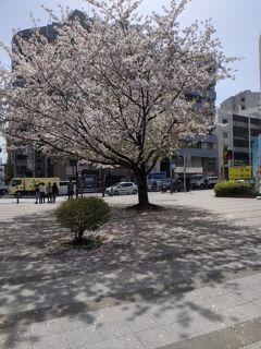桜、運試し、芝公園から東銀座チャンスセンターへ!