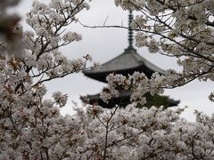 20210329-20210404 京都 桜満開の京で、お花見散歩