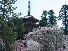 1300本の桜を求める人でいっぱいの醍醐寺
