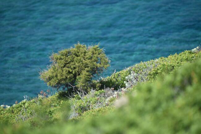 去年の夏にサルデーニャ島で2週間、働きながらホリデーを楽しむワーケーションを実行した時の話を書いています。<br />この日は丸一日、アジナーラ島へのツアーに費やしました。アジナーラ島というのは、サルデーニャ島の北西部の突先にある小さい島で、今は自然保護区になっています。けれど、少し前までは、監獄島でした。そこのところが面白いツアーでした。<br /><br />私達が住む英国では、ワクチン接種が順調に進み、ロックダウン規制が少しずつ緩み始めています。でも海外旅行は依然として禁止されています。なので、過去の旅行を振り返る日々。過去に50か国超を旅した記録は、どうぞこちらから:https://mirandalovestravelling.com/ja/