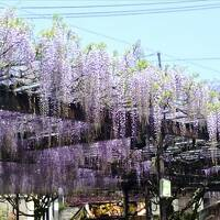黒木の大藤祭りとグリーンピア八女で温泉を楽しむ春の一日(日帰り回想録)