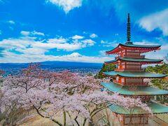 思った以上に満開っぷりの桜を堪能できた