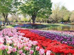 昭和記念公園、チューリップの彩り・・・