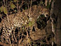 噂の「アフリカ・オーバーランドツアー」に参加してみたさ…その11 サウスルアングアのサファリ