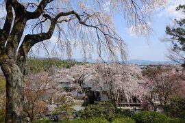 2021年京都の桜 その3~嵐山・天龍寺の精進料理と枝垂桜