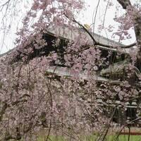 近くて遠い奈良②~人力車に初めて乗りました~