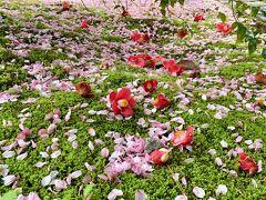 花より団子IN京都.。o○ 天龍寺で綺麗な花々に癒されて♪ランチはパスタ&ピザで大満足♪ 2日目前編 嵐山へ Let's Go!!