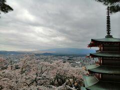 桜満開の新倉山浅間公園