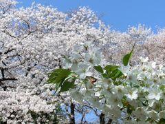 春を感じに新宿御苑へ♪~2021~