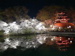 高田公園の桜 2021