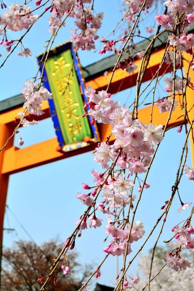 """桜色に染まる京都&奈良 Vol.3はんなり、うっとり、枝垂れ桜に恋する""""京都""""with milkちゃん"""