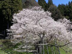 桜と温泉と肉‥岐阜を巡る