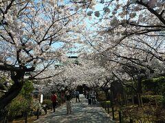 鎌倉2021桜 【1】明月院&建長寺