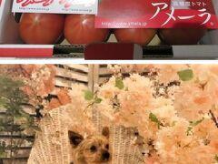 アメーラトマトを買って、旧軽井沢のワンコ宿(ルシアン)とワンコ無し宿(エレガンス)に分宿