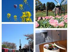 """チューリップ満開のフラワーセンター&のどかな""""北条鉄道の景色""""を楽しむ「春の遠足」♪"""