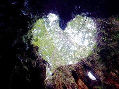 屋久島2日目 縄文杉登山☆往復22km 縄文杉・ハートの切り株ウィルソン株・走るトロッコに遭遇