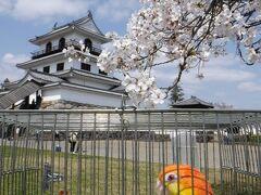宮城県白石城の桜