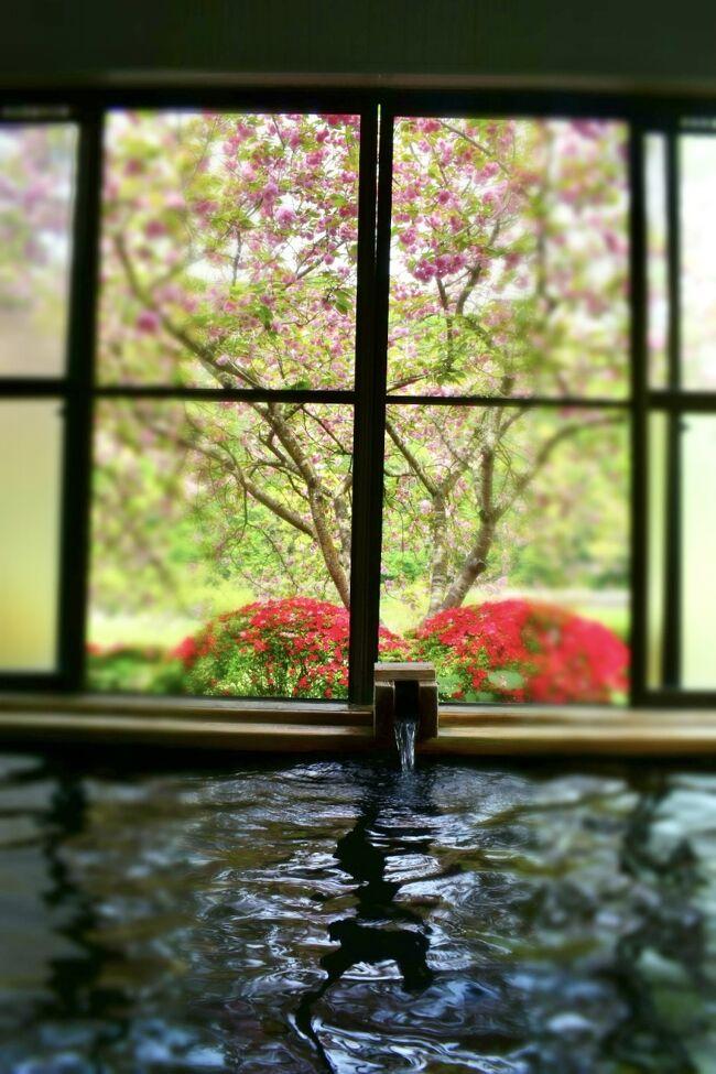 桜はもうさんざん見飽きるほど見てきたので、最後の〆はこんな花見温泉で。