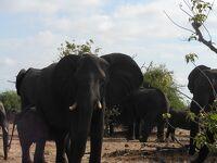 王道~南アフリカ、ジンバブエ、ザンビア、ボツワナの旅①~