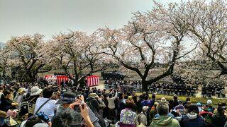甲斐・駿河の桜(その4)