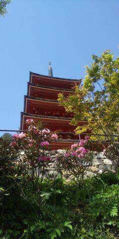令和3年コロナに負けず京都・奈良の桜の下を歩きたい!その4、長谷寺、京都新京極(2021年4月9日)