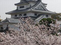 【2泊3日 春の愛媛 ひとり旅】お城と桜と橋と鯉!の巻 8