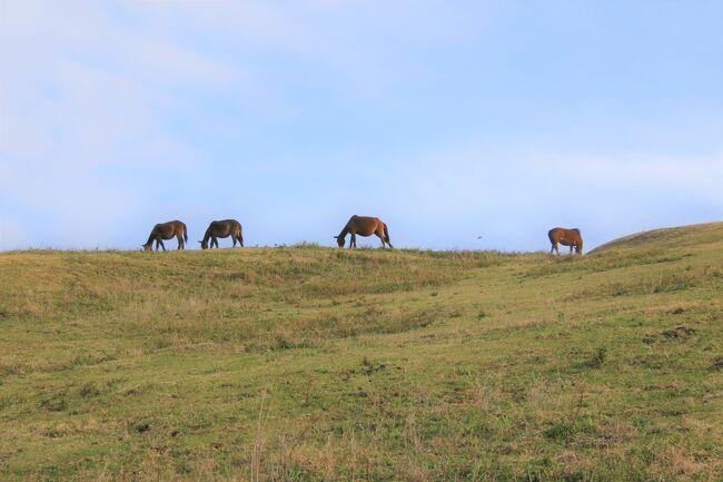 都井岬で都井灯台訪問後斜面の御崎馬を見て、最後は串間温泉 いこいの里でまったり