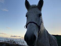 道南を巡る 馬と温泉の旅1日目
