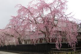 北東北の桜巡り ② ~角館武家屋敷街と久保田城址公園の桜