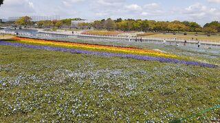 東海道本線普通列車と臨時路線バスで行く浜名湖ガーデンパークの花を楽しむ日帰り旅(前編)