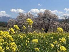 2021年04月 小布施、須坂の桜を求めて、ぶらぶら散歩してみました。