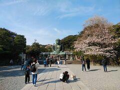 鎌倉2021桜 【4】高徳院&長谷寺