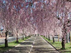 日中線しだれ桜と喜多方蔵の街