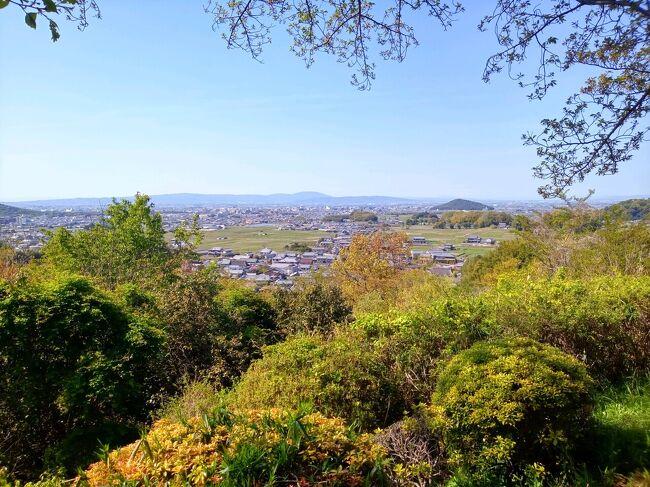 コロナ第4波によりまん延防止等重点措置も発出されたご時世ですが、明日死んでも悔いの無いよう、毎年行っている吉野の桜を見に行きました。当然密を避け感染対策しながらの一人旅です。<br /><br />今年は全国的に桜の開花が早く、4/9には中千本以下はほとんど葉桜になっていましたが、お天気も良く、吉野の桜も翌日の飛鳥の自然もすばらしく、まさに命の洗濯ができました。<br /><br />昨年SFC修行し、晴れてプラチナステータスとなりSFCカードを取得しましたが、つい最近ANAさんがボーナスPP付与(ダイヤ様4万、プラチナ15000)と6月までPP2倍キャンペーンという大戦略を打ち出したため、完全に術中にはまったと思いながら、今年もプラチナステータスを維持すべく修行を継続することになりました。。<br />ただし私は真正節約家なので、ただ飛行機に乗るだけではなく、行きたいところややりたいことをする旅で修行をしたいと思い、関西ではPP稼げませんが、今年の桜は一度切りと思い、吉野・飛鳥の旅から修行開始です。^^<br /><br />2021年4月9日(金)<br />5:15 最寄り駅発高速バス<br />7:00 羽田発ANA13便<br />8:05 伊丹着<br />8:20 伊丹発高速バス<br />8:50 あべの橋着<br />9:10 近鉄大阪阿部野橋発 特急吉野行<br />10:26 吉野着<br />10:40 吉野発奈良交通臨時バス<br />10:50頃 中千本公園着<br />10:55 竹林院発奥千本行バス<br />11:05頃 奥千本着<br />奥千本~上千本~中千本 散策<br />14時頃 昼食 西澤屋で葛うどん<br />15時頃 吉水神社<br />16時頃 徒歩で下山<br />16:37 吉野発<br />17:44 大和八木着 カンデオホテル泊<br /><br />●4月10日(土)<br />7:00起床<br />7:30 朝食バイキング<br />9:35 チェックアウト<br />9:40 大和八木発 橿原神宮前駅でロッカーに荷物を預ける<br />10:02 飛鳥着<br />10:30頃 高松塚古墳、飛鳥歴史公園館<br />赤かめバス11:42発 11:56石舞台着 祝戸地区散策<br />12:57石舞台発 13:02万葉文化会館着 万葉文化会館見学<br />14:02万葉文化会館発 14:13甘樫丘着 甘樫丘散策<br />15:09甘樫丘発 15:18橿原神宮前駅着 <br />15:30 橿原神宮前発<br />16:12 阿部野橋着<br />16:30 阿部野橋発高速バス<br />17:00 伊丹空港着<br />18:00 伊丹発ANA36便<br />19:00 羽田着(15分早着)<br />19:15 羽田発高速バス 20:30頃帰宅