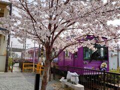 往復フェリー利用で京都・琵琶湖の桜を愛でる一人旅 京都嵐山編
