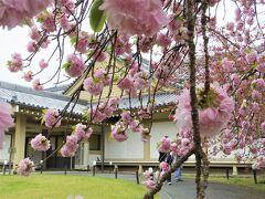 2021年4月 京都と奈良でお花見(4)醍醐の花見