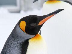 J56. 日帰り旭山動物園でペンギン散歩
