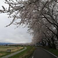 ☆2021年 東北 桜旅☆ 鶴岡 酒田 編 No1