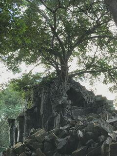 魅惑のカンボジア(ベンメリア遺跡)