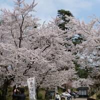 【みちのく三大桜】2泊3日(2日目)