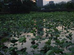 ☆上野の森から夕暮れの不忍池のひとり歩きでみつけたものは…。