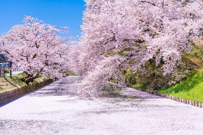 桜は満開もいいけれど、散り際の絶景「花筏」を求めて弘前に日帰り旅行をして来ました。<br /><br />いつかは見てみたいと思っていた弘前城の花筏。<br />コロナで会社も無くなり(=失業(泣))、時間だけは自由になった今年、ピンポイントで見頃の日を狙って行くことができました。<br /><br />花筏予想と天気予報を信じて、いざ弘前へ!<br />