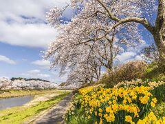 福島の国道349号線沿線の桜を巡る撮影行2021(前編)