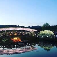 足利館林 花と沼の旅
