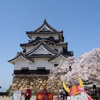 往復フェリー利用で京都・琵琶湖の桜を愛でる一人旅 国宝彦根城編