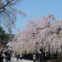 【みちのく三大桜】2泊3日(3日目)