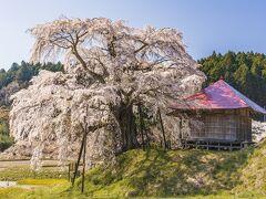 福島の国道349号線沿線の桜を巡る撮影行2021(後編)