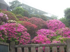 朝活で人が少ない早朝に東京の花の名所を巡る