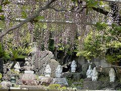 花を探して 高圓寺 手児奈霊堂 弘法寺など